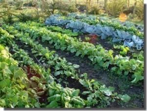 #idiotdujour Il vole des légumes dans le potager de sa voisine et finit… dans le panier à salades ! « Rendez-Vous En Terre Mal Connue   L'Idiot Du Jour   Scoop.it