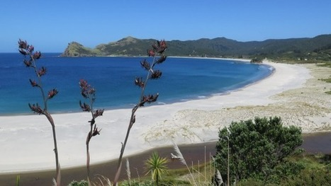 City gets a sanctuary | Gt Barrier Island and Tongariro National Park | Scoop.it