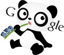 Pourquoi l'intégration de Panda dans l'algorithme de Google est-elle logique ? - Polynet, le blog | Oui, pourquoi ? | Scoop.it