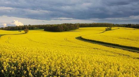 Biocarburants Bio? Peut-être… Ecolos? Vraiment pas! - Ouest France   Agriculture en Pays de la Loire   Scoop.it