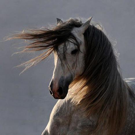 Gorgeous!   Equine Photography   Scoop.it