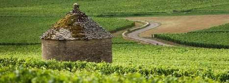 Uneven Burgundy Vintage Set to be Small | Vitabella Wine Daily Gossip | Scoop.it
