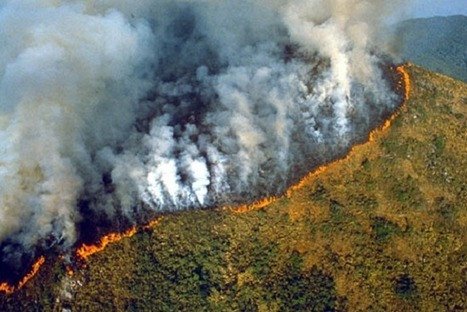 Amazon Rainforest Preservation Law: A Work in Progress | Rainforest EXPLORER:  News & Notes | Scoop.it