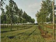 L'agroforesterie pour améliorer les conditions de vie des paysans africains   Nourrir la planète... autrement   Scoop.it