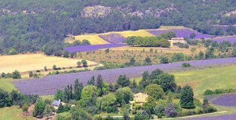 La route de la lavande en Haute Provence | The Blog's Revue by OlivierSC | Scoop.it