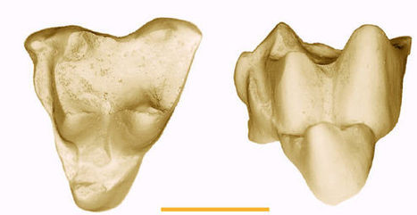 New Fossils Challenge Marsupial Evolution Theory - Sci-News.com | Fossils | Scoop.it