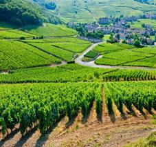 L'oenotourisme | Un billet pour l'évasion | Le tourisme viticole | Scoop.it