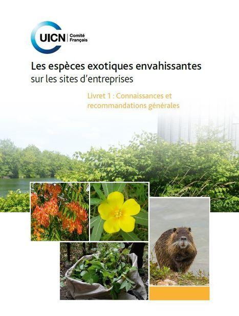 Les entreprises ont un rôle à jouer dans la lutte contre les espèces exotiques envahissantes | Insect Archive | Scoop.it