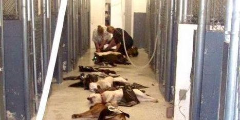 Petition: No Mandatory Killing after 10 Days! | Saving STRAYS, PETS and SHELTER ANIMALS~ | Scoop.it