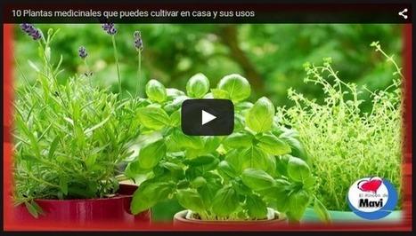 10 Plantas medicinales que puedes cultivar en casa y sus usos | PIENSA en VERDE | Scoop.it