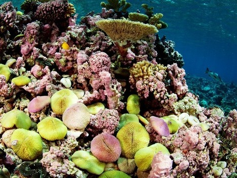 A Welcome Political Initiative to Preserve Life in The Oceans | GarryRogers Biosphere News | Scoop.it