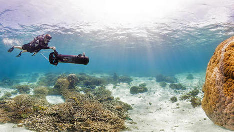 Breathtaking Panoramic Images Of Coral Reefs Reveal How They're Being Destroyed | Complex systems | Scoop.it