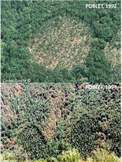 Los bosques emitirán más carbono del que absorben   Biología y Geología   Scoop.it