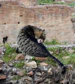 Un chat découvre de toutes nouvelles catacombes à Rome | La science en effervescence | Scoop.it