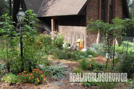 Permaculture: Anatomy Of a Fruitful Food Forest | Permaculture Design | Scoop.it