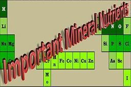 Overview of Mineral Nutrients   Stay Fit!   Scoop.it