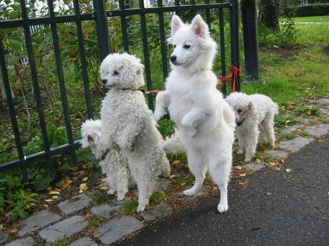Online Pet Accessories - Pet Products Australia – SeekPets.com.au | Pets - Buy Pets Online | Scoop.it