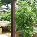 Backyard Aquaponics - A Sustainable Food Source | CplusC ... | aquaponic | Scoop.it