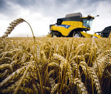 Global wheat project aims to increase yields by 50% - 12/5/2012 - Farmers Weekly | Plant Science | Scoop.it