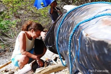 STOP AL MALTRATO ANIMAL: Llorando por los tiburones | maltrato animal | Scoop.it