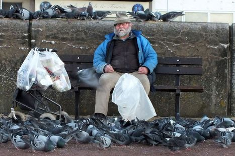 'Pigeon man' jailed after breaching ASBO banning him from...   Rapid Environmental Services   Scoop.it