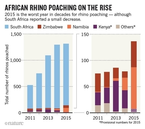 "Worst year ever for rhino poaching in Africa | Revue de presse ""Afrique"" 