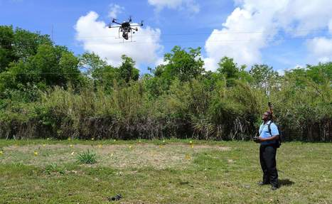 Drones, dogs deployed in battle save South Florida avocado crop | Agriculture news | Scoop.it
