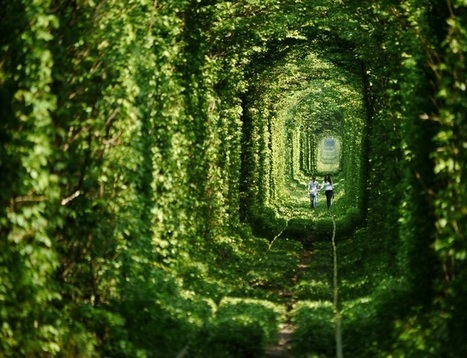 """Foliage Covered """"Tunnel of Love"""" is an Enchanting Pathway for Lovers 