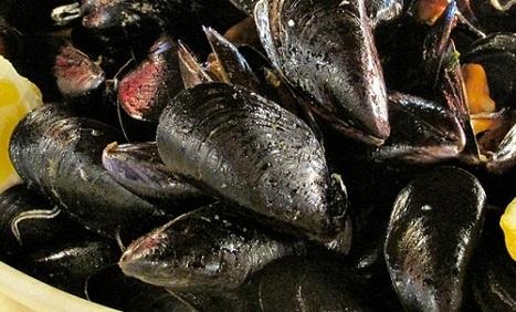 The moscioli of Portonovo of Ancona tipicity of  Conero Riviera   Le Marche and Food   Scoop.it