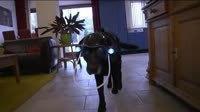 Speciale Helm Voor Blinde Hond - Opmerkelijk - Video - Zie.nl | cazanshondencentrum | Scoop.it