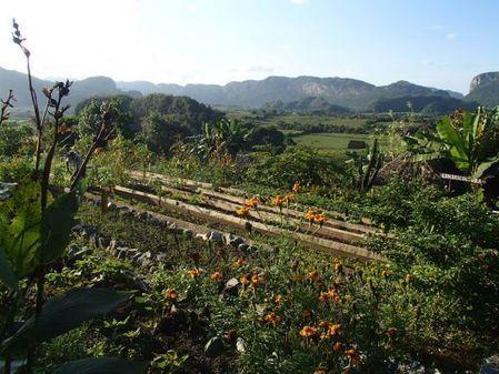 Cuba, le pays où l'agroécologie est vraiment appliquée | Pour une agriculture et une alimentation respectueuses des hommes et de l'environnement | Scoop.it