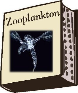 Chesapeake Bay Life > Zooplankton | Plankton in the Patuxent | Scoop.it
