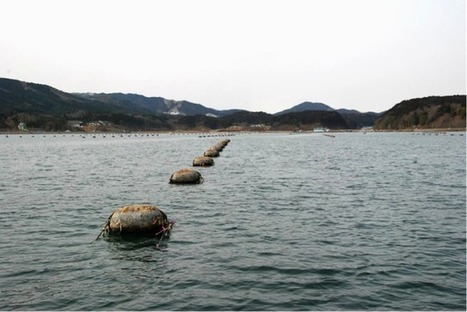 The Aquaculturists: 11/04/2016: Five years after Tsunami, Miyagi Prefecture Fisheries Cooperative Oyster farms celebrate ASC certification | Global Aquaculture News & Events | Scoop.it