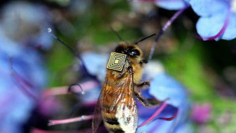 Bees with chips might save the planet | Managing Technology and Talent for Learning & Innovation | Scoop.it