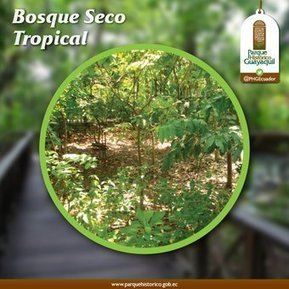 Bosque seco tropical | Agua | Scoop.it