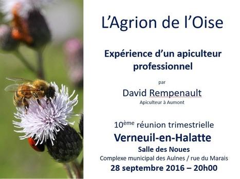 Tout savoir sur les abeilles et l'apiculture - L'Agrion de l'Oise | Variétés entomologiques | Scoop.it