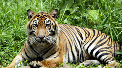 Indulge in Wild Adventures in Jim Corbett National Park with Corbett Holidays Packages from Delhi | Kullu Manali tour with cheap airfare | Scoop.it