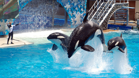 ​What will happen after animals are legally recognized as persons? - io9 | Blackfish CNN Documentary 2013 | Scoop.it
