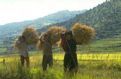 « Oui, l'agriculture biologique peut nourrir le monde » -- Sott.net | Cultiver la terre autrement | Scoop.it