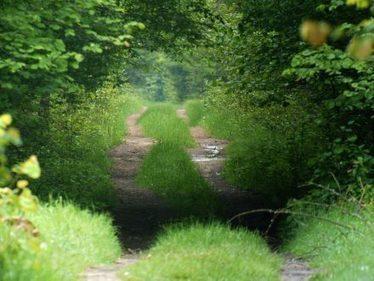 Ignoring scientists, Poland begins logging famous primeval forest | Forest | Scoop.it