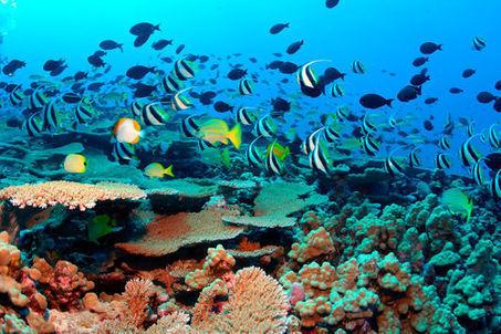 Les Etats-Unis créent la plus grande réserve marine au monde | Rays' world - Le monde des raies | Scoop.it
