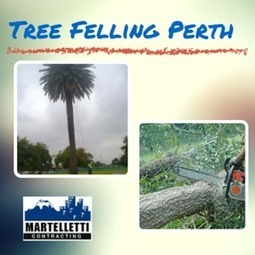 Tree Felling Hazards Perth Property Owners Should Know About | Great Finds | Scoop.it