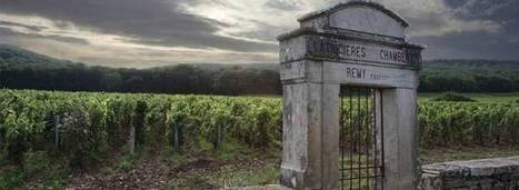 Burgundy Struggles to Meet Growing Demand | Wine News & Features | Grande Passione | Scoop.it