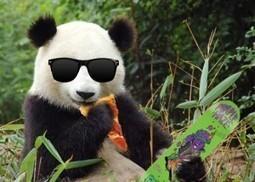 Panda 4.0: Un Nuevo Cambio en el Algoritmo de Google! (y van...) | Posicionamiento SEO en Google Explicado | Scoop.it