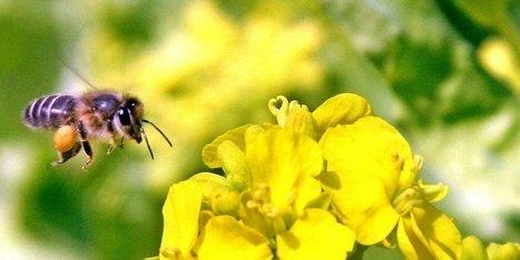 Une agence française dédiée à la biodiversité | Agriculture en Dordogne | Scoop.it