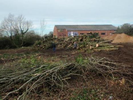 Property developer ordered to pay £24,000 after illegally felling 200 trees | CW | Scoop.it