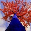 Blue Trees by Konstantin Dimopoulos | Colossal | Urban Design | Scoop.it