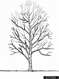Tree Trimming & Pruning Guide: Tips, Techniques For Trimming Trees | Tree Pruning for a Healthy Tree | Scoop.it