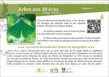 Un sentier botanique au Jardin Des Plantes de Montpellier | Arboretums, parcs et jardins,jardin botanique | Scoop.it