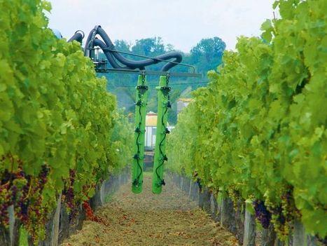 Les pistes de lutte biologique se multiplient | Le Vin et + encore | Scoop.it